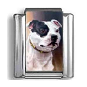Staffordshire Bull Terrier Dog Photo Italian Charm