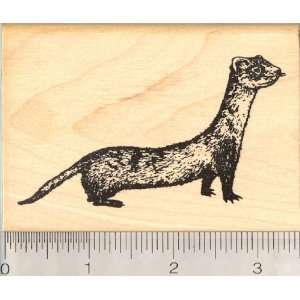 Black Footed Ferret Rubber Stamp Arts, Crafts & Sewing